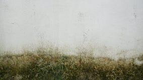Mos op de witte oude muur stock foto's