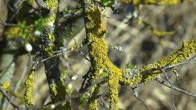 Mos op de zonnige dag van de boomoppervlakte stock videobeelden