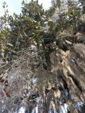Mos op een boom stock foto's
