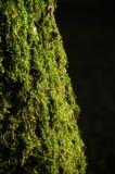 Mos op een boom Royalty-vrije Stock Foto