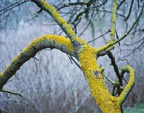 Mos op een boom stock afbeeldingen