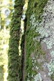 Mos op een boom Royalty-vrije Stock Foto's