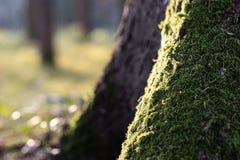 Mos op een Boom in bos royalty-vrije stock fotografie