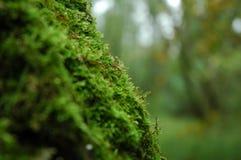 Mos op een boom in het bos stock foto's