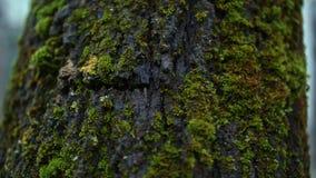 Mos op een boom in het bos stock video