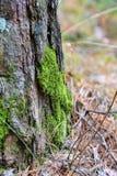 Mos op een boom in het bos royalty-vrije stock afbeeldingen