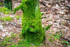 Mos op een boomboomstam stock foto's