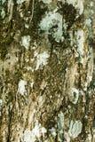 Mos op een boomboomstam Royalty-vrije Stock Foto's