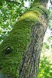 Mos op een boomstomp Stock Afbeeldingen
