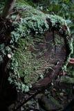 Mos op een boomstomp stock foto