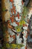 Mos op een droge boom stock foto's