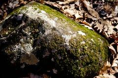 Mos op een rots stock afbeeldingen
