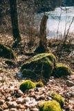 Mos op een stomp in het bos Stock Fotografie