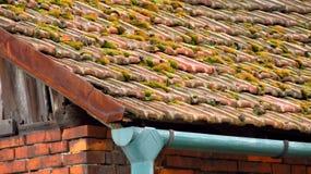 Mos op het dak Royalty-vrije Stock Foto