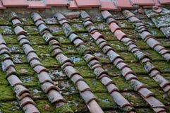 Mos op het dak Stock Foto's