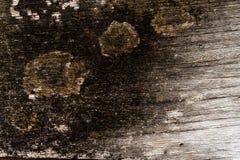 Mos op hout Stock Fotografie