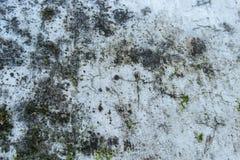 Mos op Oude Cementvloer Royalty-vrije Stock Foto's