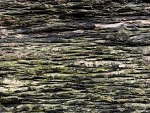 Mos op oude houten royalty-vrije stock foto