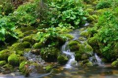 Mos op rivierrotsen Stock Fotografie