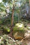 Mos op rotsen in bos royalty-vrije stock afbeelding