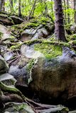 Mos op rotsen en bomen stock fotografie