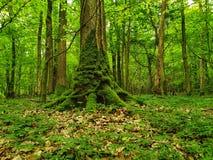 Mos op treeroots treetrunk groene gloed royalty-vrije stock foto's