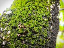 Mos på träd in i skogen Fotografering för Bildbyråer