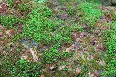 Mos texturenachtergrond Groene mos op Steenachtergrond royalty-vrije stock fotografie