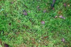 Mos texturenachtergrond Groene mos op Steenachtergrond stock foto's