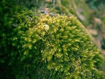 MOS verde Foto de archivo