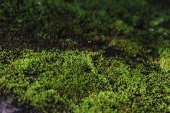 MOS verde Mos Background Foto de Stock