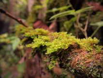 Mos w las tropikalny Zdjęcie Royalty Free