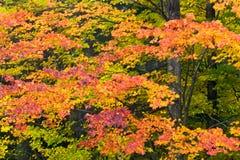 Mosaïque d'automne Images stock
