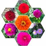 Mosaïque de belles fleurs d'été photographie stock libre de droits