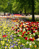 Mosaic of bulb flowers. Masses of tulips, one of the many colorful displays of spring time bulb flowers in the world famous Keukenhof garden park in the royalty free stock photography