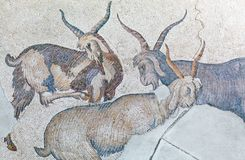Mosaic from the Byzantine period. Group of goats - fragment of ancient mosaic from the Byzantine period Stock Photography