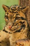 Mosaic feline Stock Images