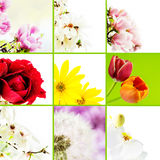 Mosaic of flowers Royalty Free Stock Images