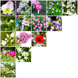 Mosaic flowers Royalty Free Stock Photography