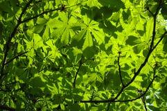 Mosaic Leaf Stock Photography