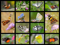 Mosaic photos of butterflies Royalty Free Stock Photo