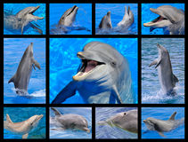 Mosaic photos of dolphins Stock Image