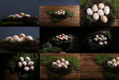 Mosaic photos of eggs Royalty Free Stock Photo
