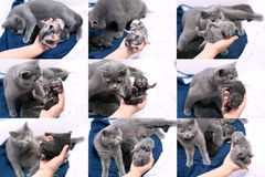 Mosaic of photos, kitten with mother cat Stock Images