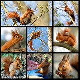 Mosaic red squirrel Royalty Free Stock Photography