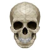 Mosaic skull. Image. Illustration on white background Royalty Free Stock Photography