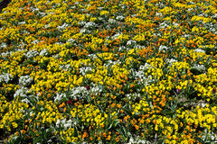 Mosaic of spring flowers Stock Image