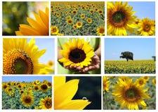 Mosaic   sunflowers Stock Photo