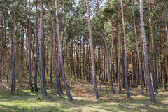 The mosaic of trees. Royalty Free Stock Photos