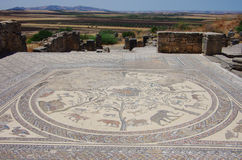 Mosaic at Volubilis Stock Images